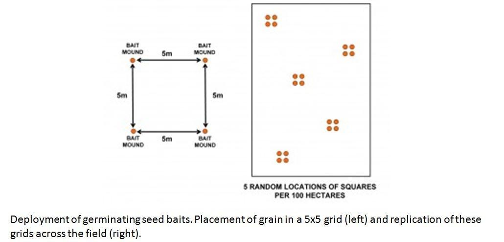 GSB arrangement