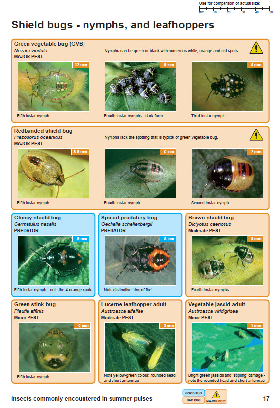 Release of insect identification guide for pulse industry in the ...